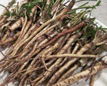 Las células cancerosas se descomponen después de varias semanas de usar este té de hierbas