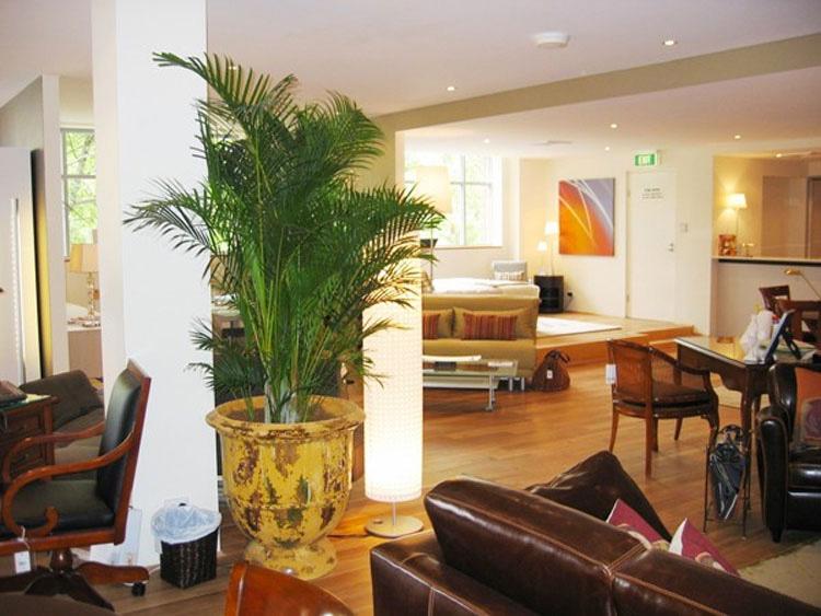 Pon plantas en tu dormitorio, pero no por decoración. ¡La razón es verdaderamente genial!