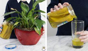 8 razones por las que nunca debes tirar el líquido de los pepinillos por el desagüe