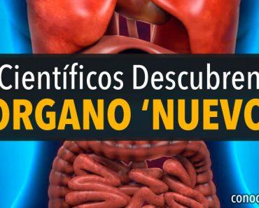 ¡Sorpresa! Los científicos descubren un nuevo órgano en el cuerpo humano