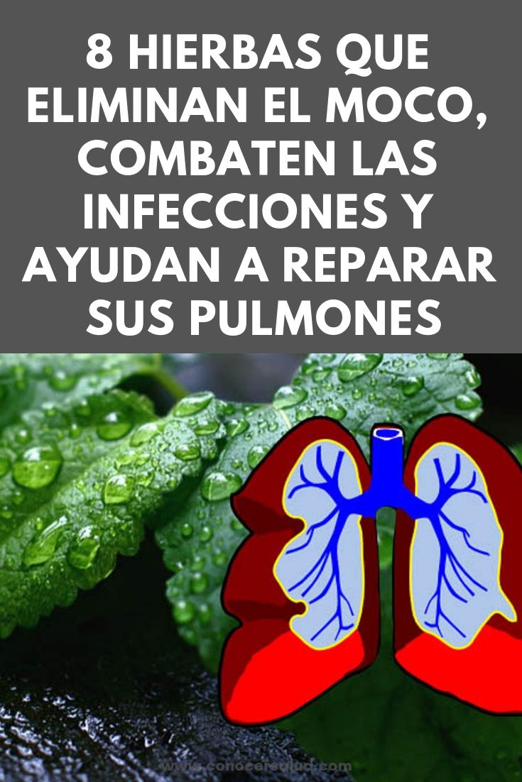 8 hierbas que eliminan el moco, combaten las infecciones y ayudan a reparar sus pulmones