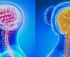 Según un estudio: las mujeres necesitan dormir más que los hombres porque sus cerebros son más complejos