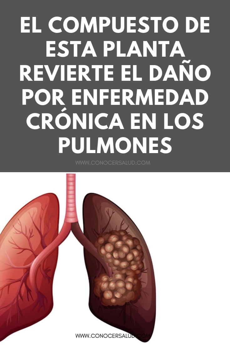 El compuesto de esta planta revierte el daño por enfermedad crónica en los pulmones, según una investigación