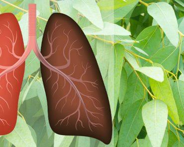9 Plantas y hierbas que reparan daños pulmonares, combaten las infecciones y aumentan la salud pulmonar