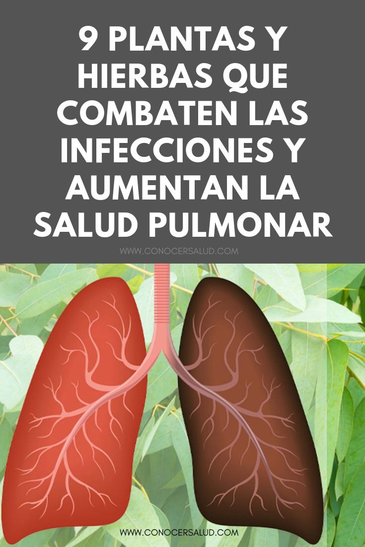 9 Plantas y hierbas que combaten las infecciones y aumentan la salud pulmonar