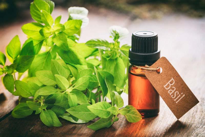 5 Aceites Esenciales Que Pueden Detener Las Alergias Para