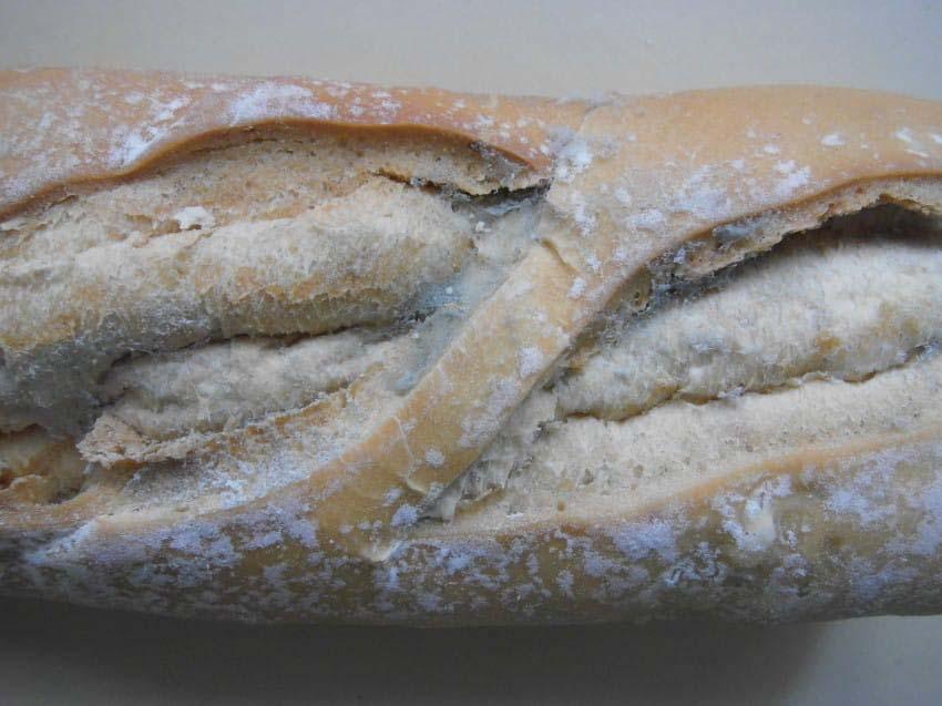 Esta es la espantosa razón por la que NUNCA debe comer pan con moho
