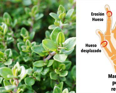 Esta potente hierba reduce el dolor, acaba con las infecciones y mejora la artritis
