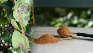 6 increíbles razones por las que debe espolvorear canela en las plantas de casa