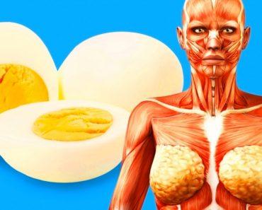 9 cosas que van a suceder a su cuerpo si comienza a comer 2 huevos al día