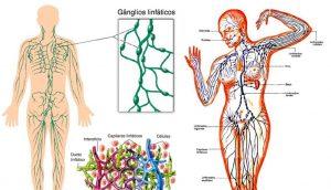 Un simple ejercicio puede ayudar a limpiar su sistema linfático