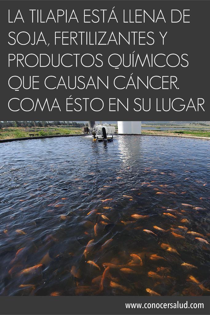 La Tilapia está LLENA de soja, fertilizantes y productos químicos que causan cáncer. Coma ÉSTO en su lugar