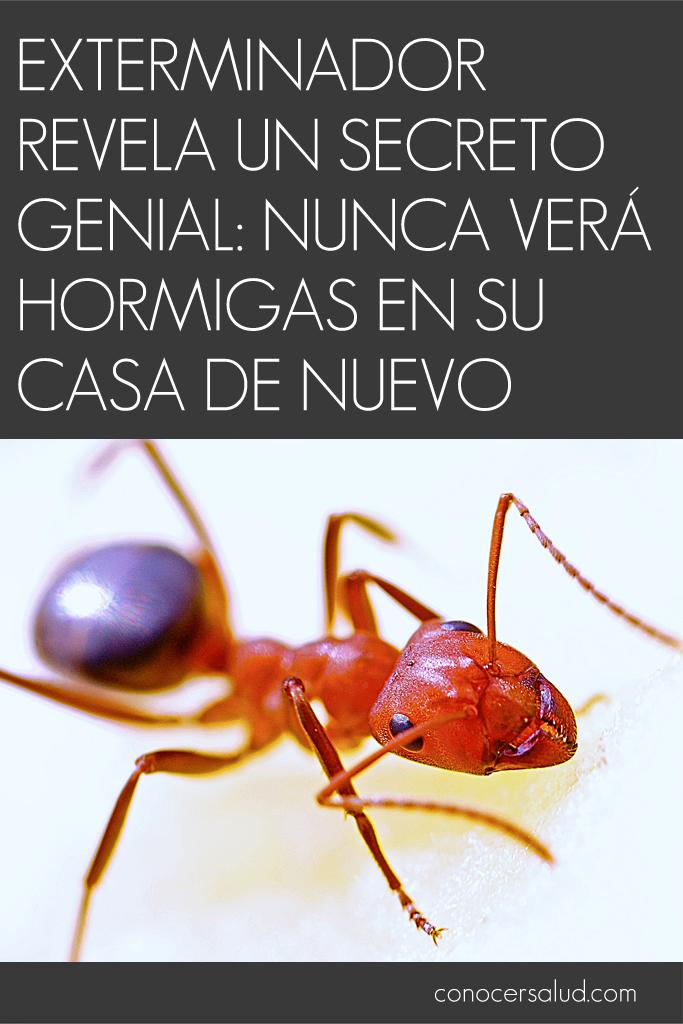 Exterminador revela un secreto genial: nunca verá hormigas en su casa de nuevo