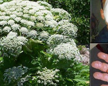 ATENCIÓN: ¡Si ves esta planta, hagas lo que hagas, NO la toques!