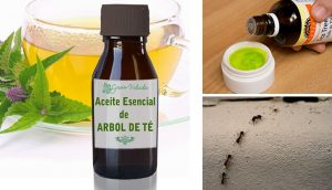5 usos del aceite del árbol del té que la mayoría de la gente desconoce
