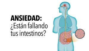 Investigadores explican cómo sus bacterias intestinales causan ansiedad, según la ciencia
