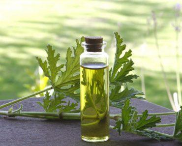 Aceite esencial de Geranio: 10 usos y beneficios