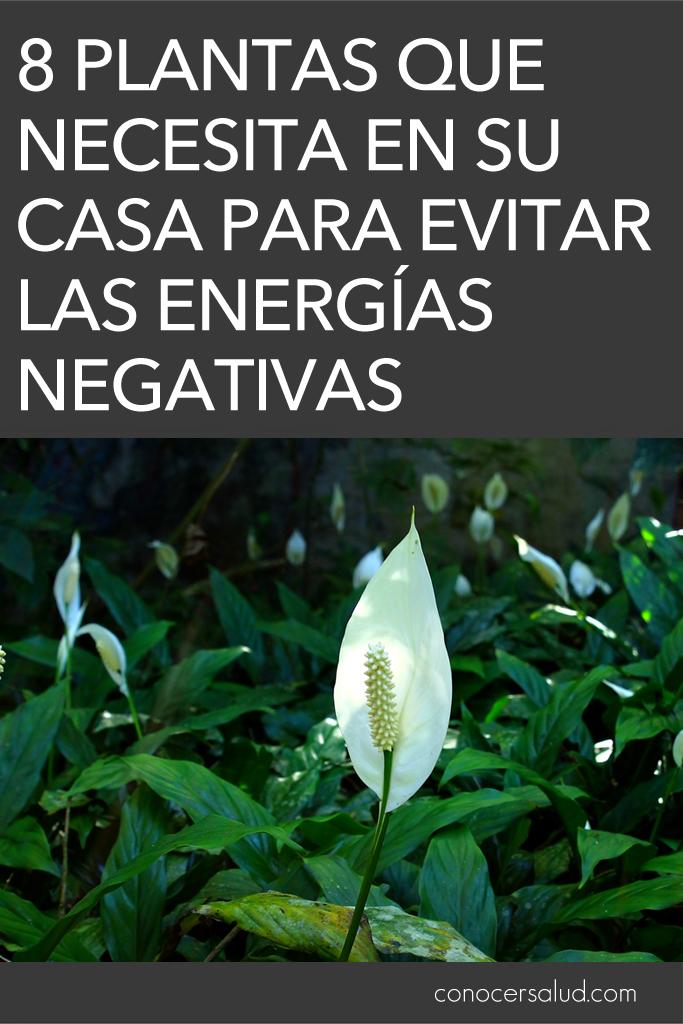 8 plantas que necesita en su casa para evitar las energías negativas