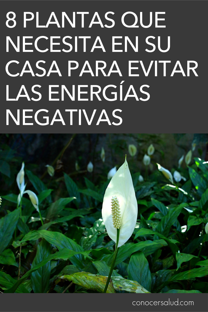 Limpiar energias negativas del hogar fabulous como - Como limpiar la casa de energias negativas ...