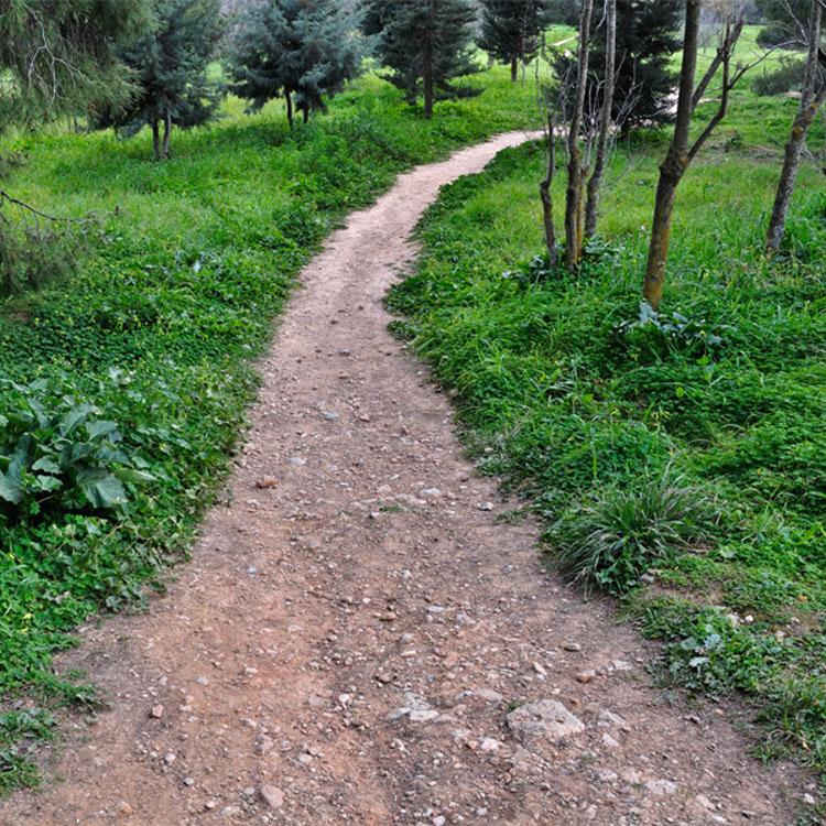 El camino que usted escoge revela su personalidad y futuro