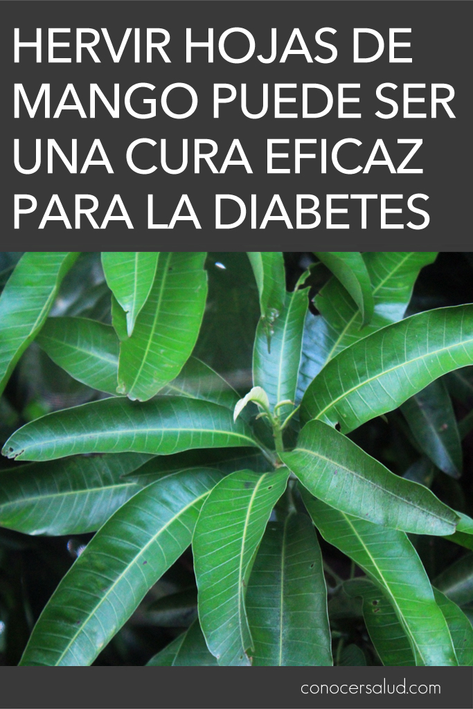 Hervir hojas de mango puede ser una cura eficaz para la