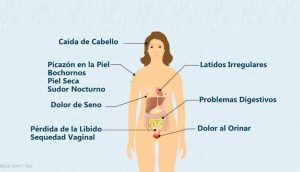 Aumento de peso en la menopausia: Qué lo causa y cómo controlarlo