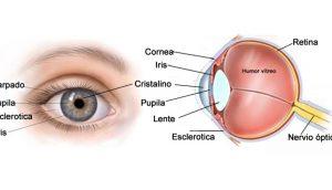 Cómo mejorar su vista con 13 métodos naturales