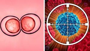 La ciencia explica cómo el ayuno puede regenerar sus células y luchar contra el cáncer