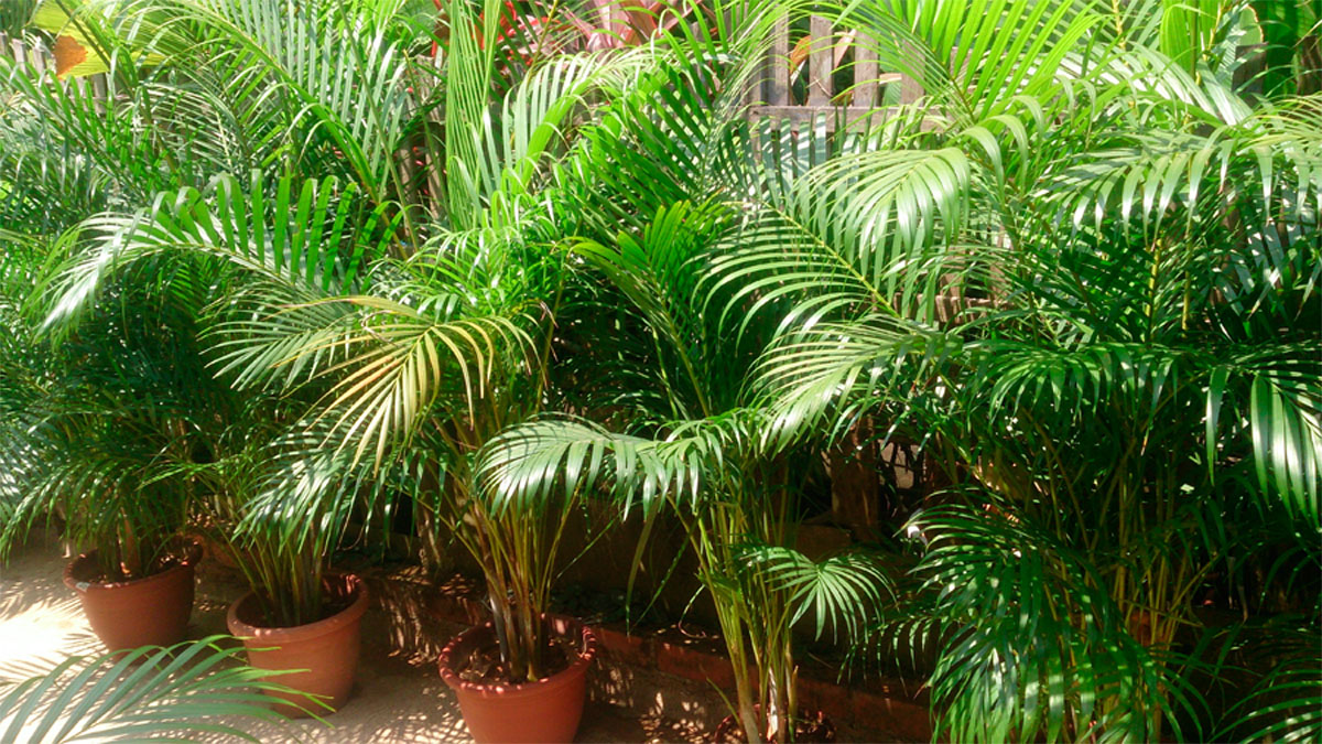 9 Plantas que emiten más oxígeno durante la noche
