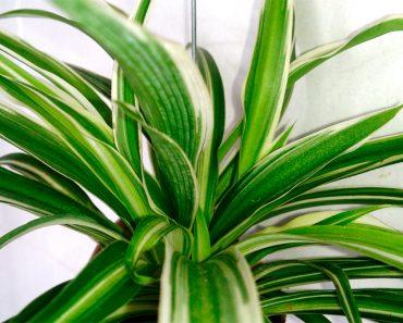 12 de las mejores plantas para tener un aire interior más limpio