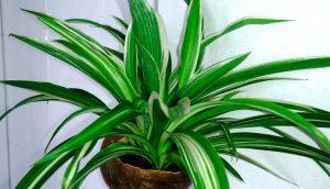 Las 5 mejores plantas para mantener su baño fresco y aireado
