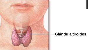 10 síntomas de una tiroides lenta (hipotiroidismo) y cómo tratarla naturalmente