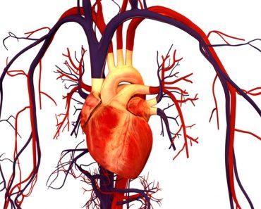 La molécula antienvejecimiento inducida por el ayuno mantiene los vasos sanguíneos jóvenes
