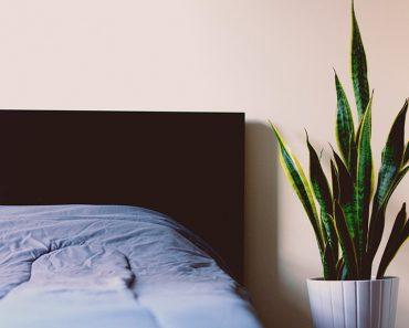 9 plantas de dormitorio que le ayudarán a dormir mejor cada noche